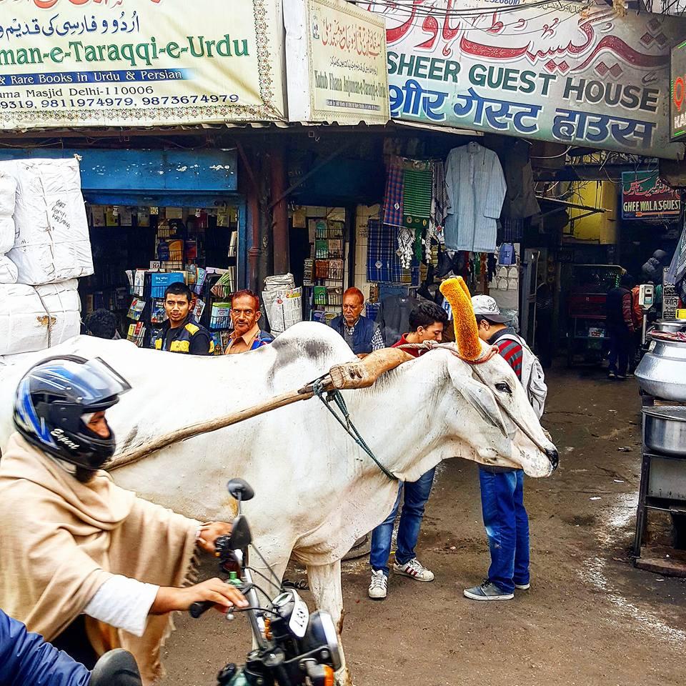 Per le strade di Vecchia Delhi