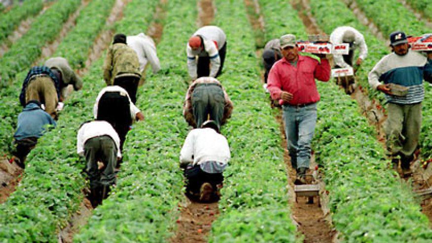 illegal_immigrants_jobs