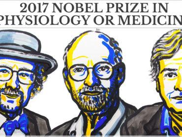 Nobel per la medicina: il premio agli scopritori del meccanismo che regola l'orologio biologico