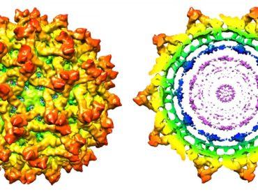 Microscopia crioelettronica: Premio Nobel per la Chimica 2017