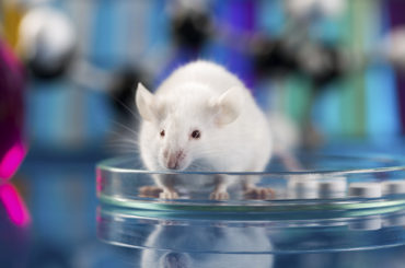 Il computer può sostituire la sperimentazione animale?