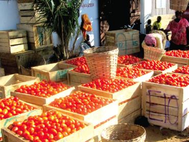 Oro rosso. La battaglia del concentrato di pomodoro cinese.