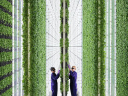 "Il fenomeno ""Vertical Farms"": illusione o innovazione?"
